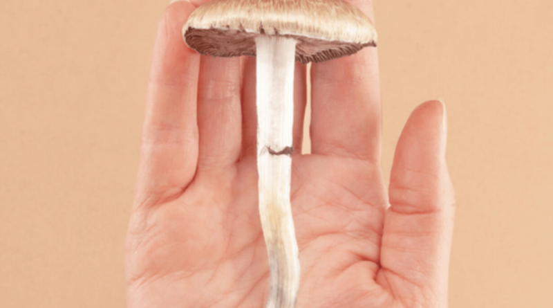Choose the most convenient way for buying shrooms