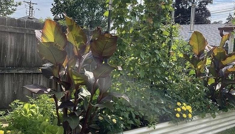 High Raised Garden Bed Program For Easy Gardening